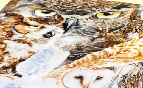 Owls Close-up